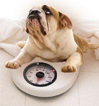 Stop pet obesity!